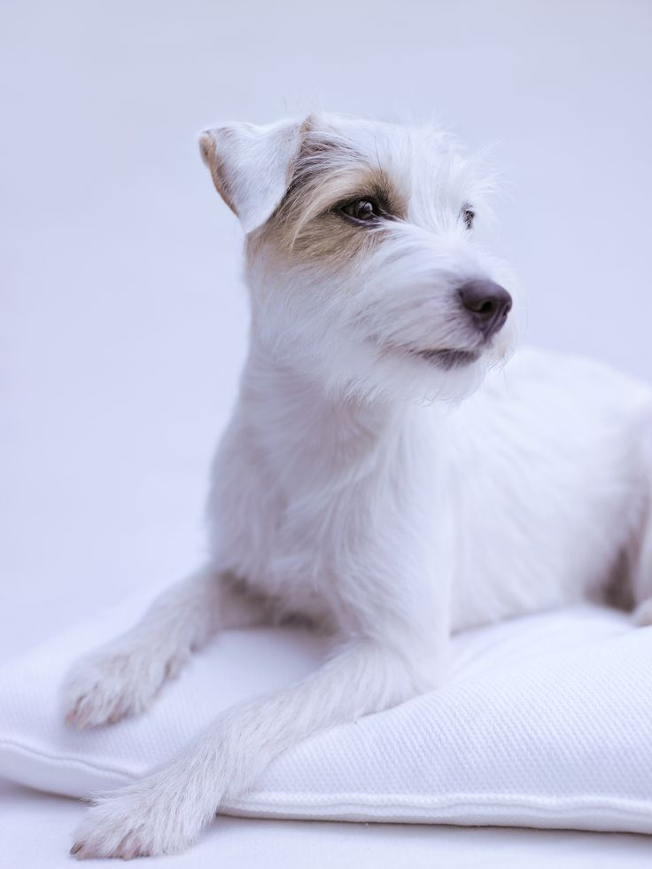 Frieda photographed by Rachael Hale McKenna for DOGS Magazine Germany