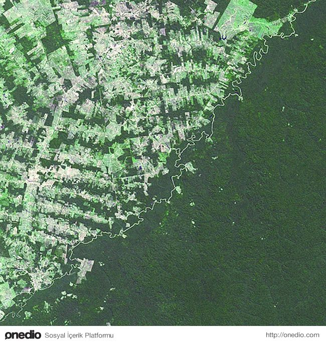 Bolivya - Brezilya - Bu iki bölge; ortalarından geçen nehirle ayrılsa da ormanları arasındaki fark yeterince ayırt edici bir faktör.