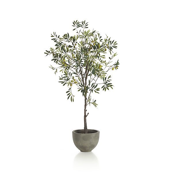 Potted Olive Tree: Remodelista