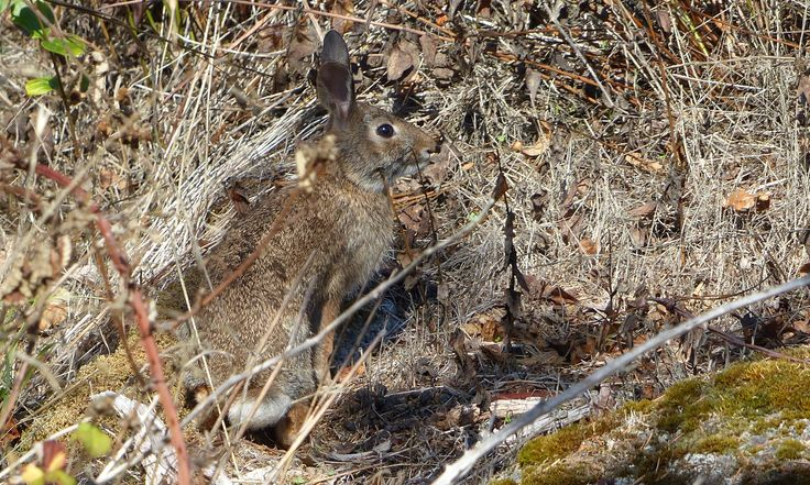 Best camouflage: Don't roll your eyes or wiggle your ears, and wear rabbit fur.