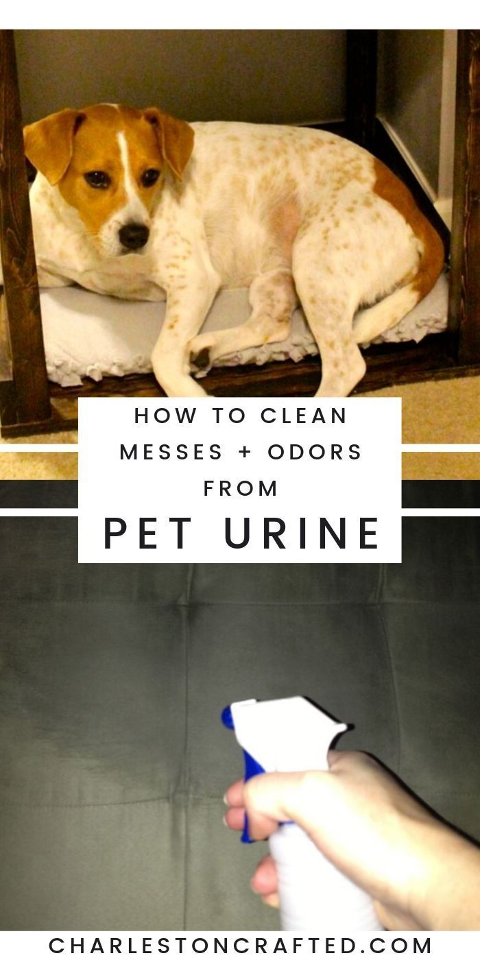 Groovy Getting Pet Urine Odor Out Of A Microfiber Couch Onthecornerstone Fun Painted Chair Ideas Images Onthecornerstoneorg