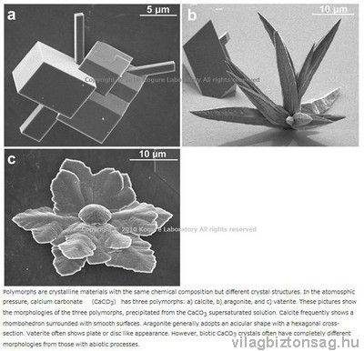 Az emberi agy közepén található tobozmirigy tartalmazza: Természetes mikrokristályok és szakrális geometria A tobozmirigyben lévő kalcit kristályok egy része vastartalmuk miatt elektromágneses tulajdonságokkal bír. (mészkő-észkő) Kémiai hatásra a kristályszerkezetben változás jön létre.