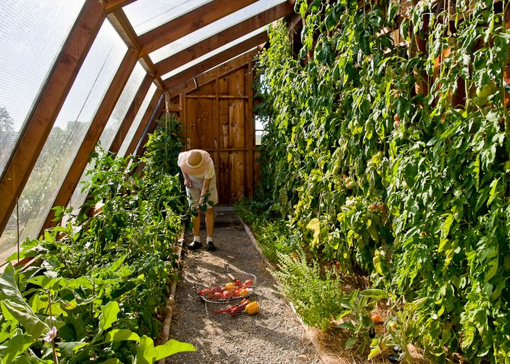 GROW YOUR TOMATOES LIKE THIS RACH! Make Something For Them To Climb   It  Will