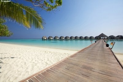 https://i.pinimg.com/736x/d8/4d/65/d84d65383d796abe1afe9b221f1e1870--resort-maldives-the-maldives.jpg