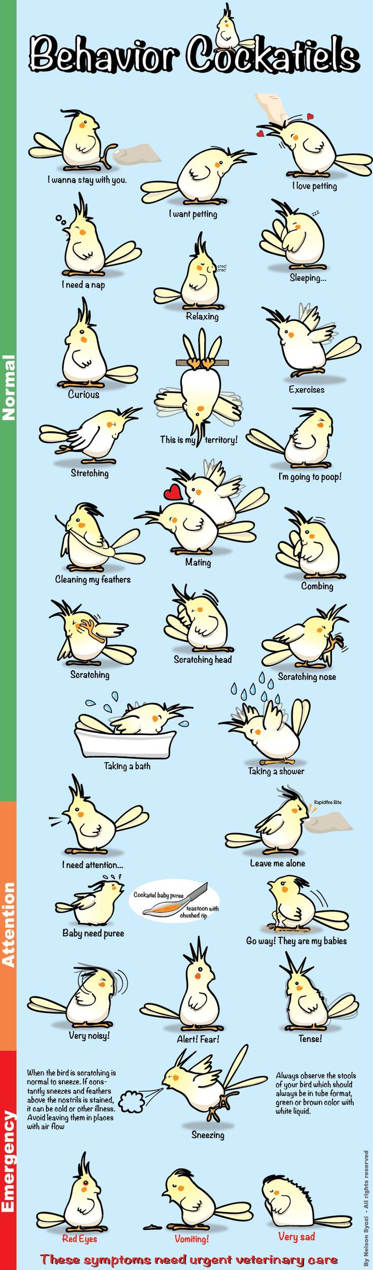 "Pet Bird Stuff... ""Behavior guide for cockatiels"" By Nelson Syozi"
