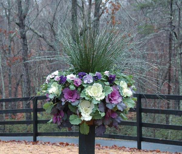 97 best images about ornamental cabbage planter on pinterest gardens fall containers and - Best flower combinations for containers ...