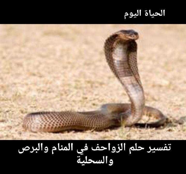 تفسير حلم الزواحف في المنام البرص والحية والسحلية للعزباء والمتزوجة والرجل Animals Snake Leopards