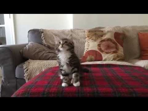 """Uptown """"Kitty"""" Funk - What a Mover!"""