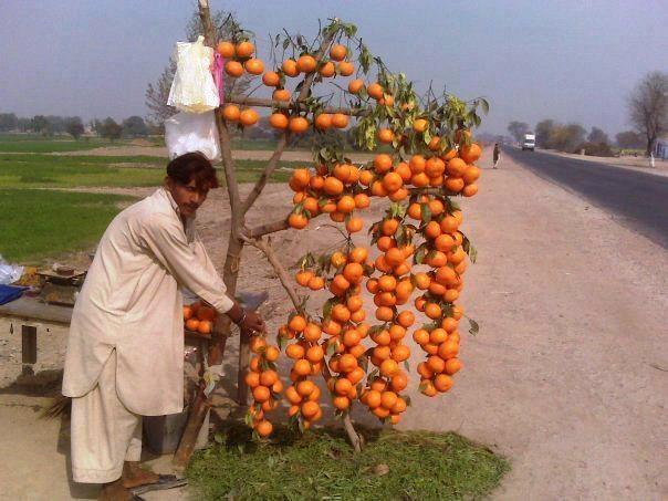 contact for sale- http://biblioteca-oraseneasca-borsa.blogspot.ca/ and more -  see shary-  via Explore the Beauty of Pakistan
