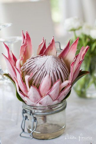 South African Wedding: Pink Protea floral decor.