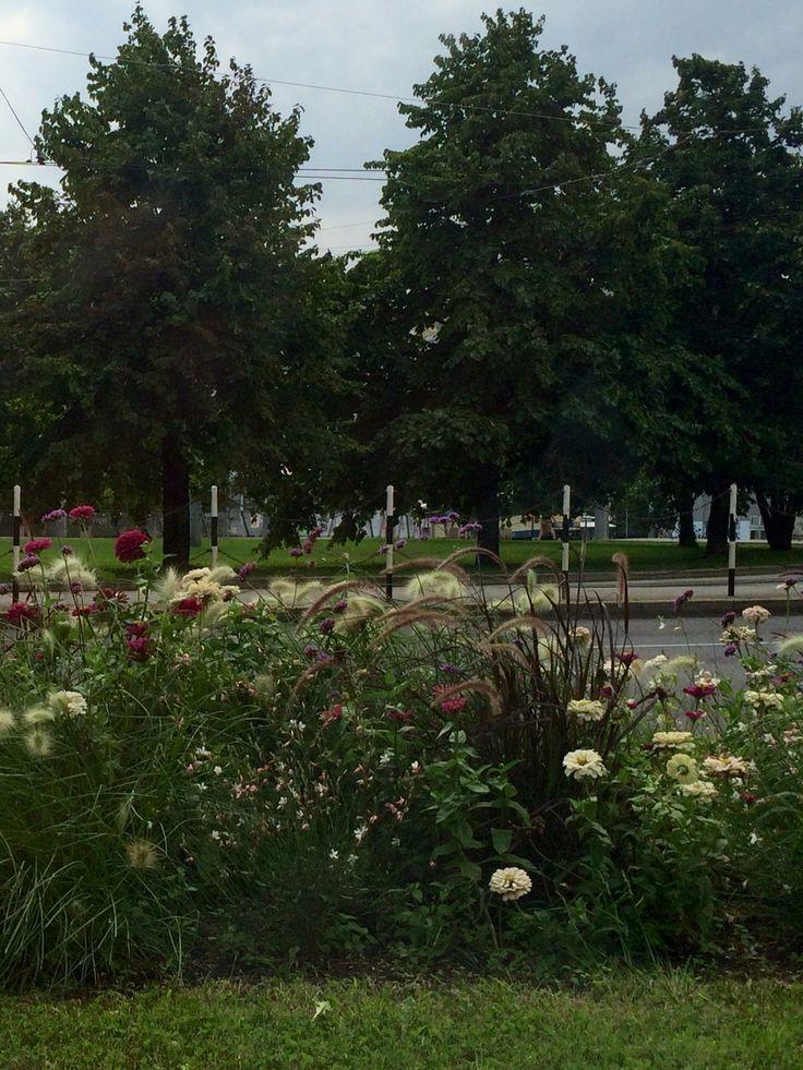 Вена -парк