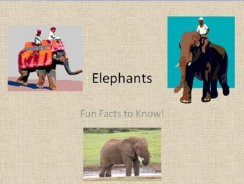 Elephants - Fun Facts About Elephants PowerPoint. Learn about elephants! 21 slides of fun facts about elephants, which can be used to introduce a jungle theme unit of study. Informational text for reading practice. Learn the differences between African elephants and Asian elephants.