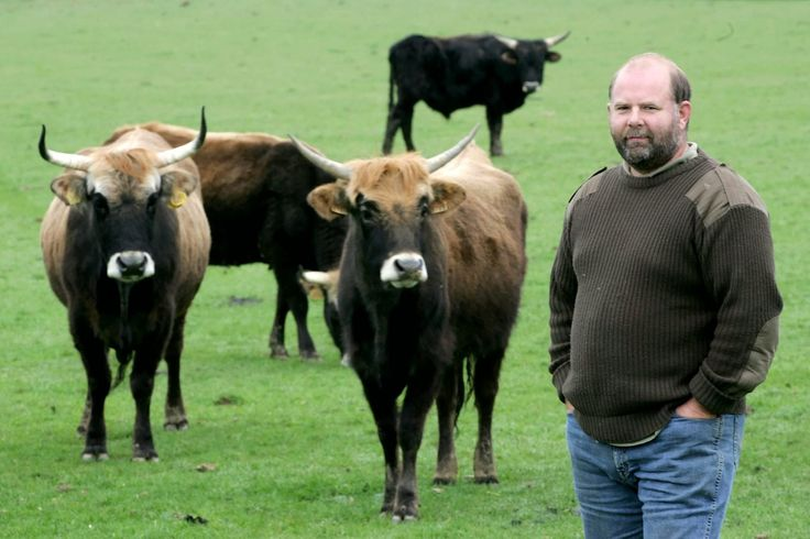 A herd of cattle descended from cows bred by two Nazi zoologists to recreate the extinct Auroch of Teutonic legend proved too wild for Derek Gow—who was forced to cull the 'lunatics.'