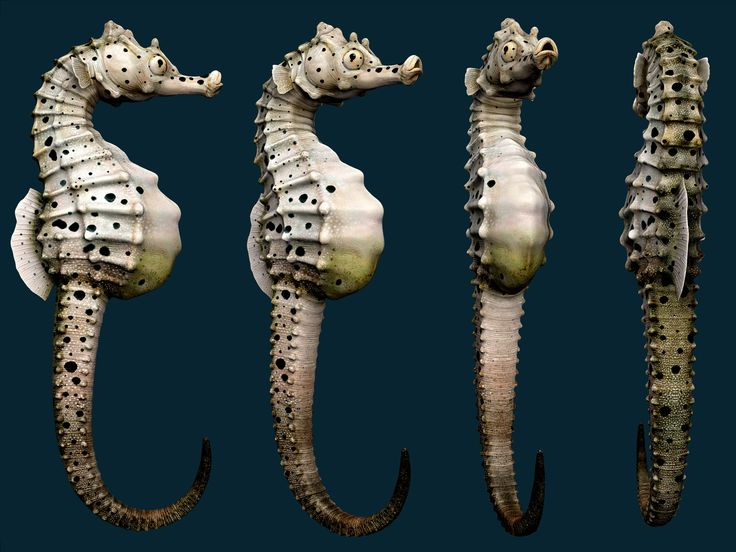 Zbrush Complete Image