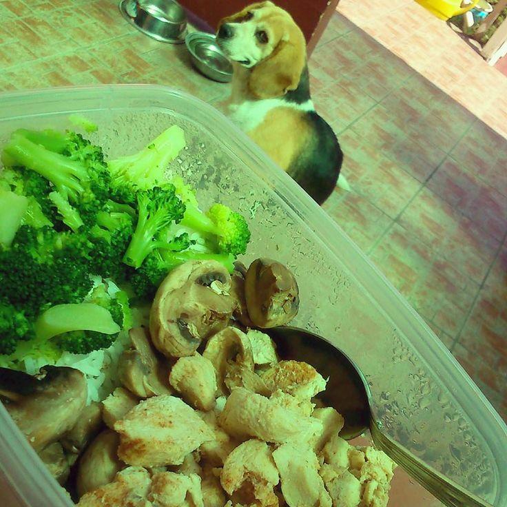 #beagle #dog #eat #lunch #broccoli #chicken