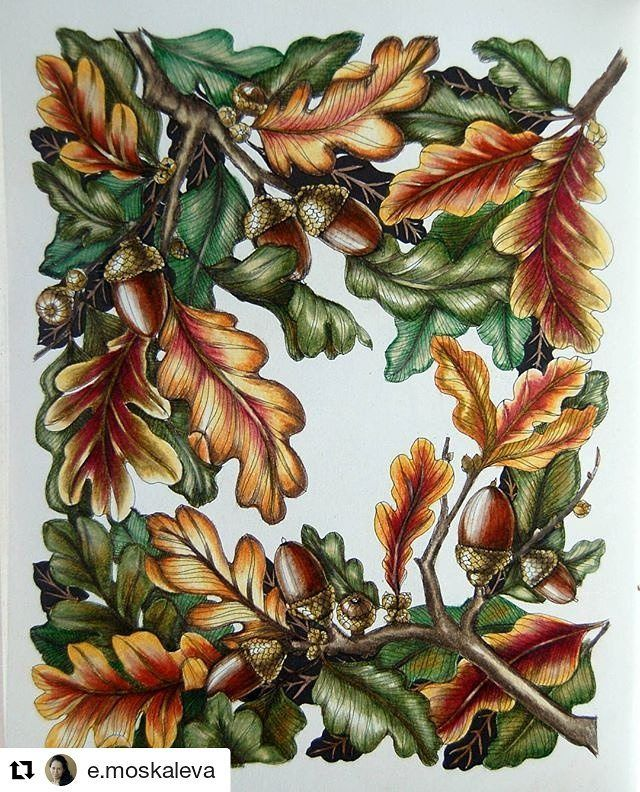 Repost E Moskaleva Get Repost English Oak Coloring Video Https Youtu Be Egirc 32cca Arte E Colorir Kolorowank Faber Castell Polychromos Malen