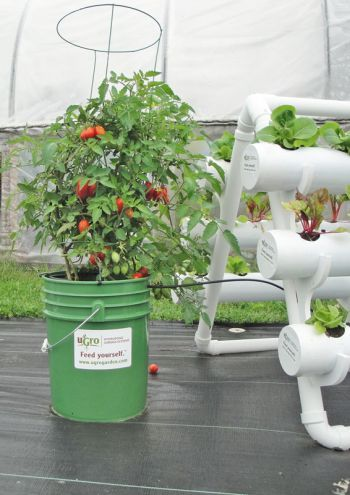 The U Gro Hydropail Grows Larger, Bushier Vegetables Like Peppers Or  Tomatoes While Connected · Home HydroponicsHydroponic GardeningTall ...