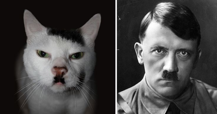 Remember when we wrote about dogs that look like something else? Now it's the cat's turn to shine. Here is a list of cats that got bored of looking like cats and decided to look like something else instead.