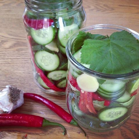 Making a hot & sour pickle! The loganberry leaves from the garden help to keep the cucumber pickles crunchy.