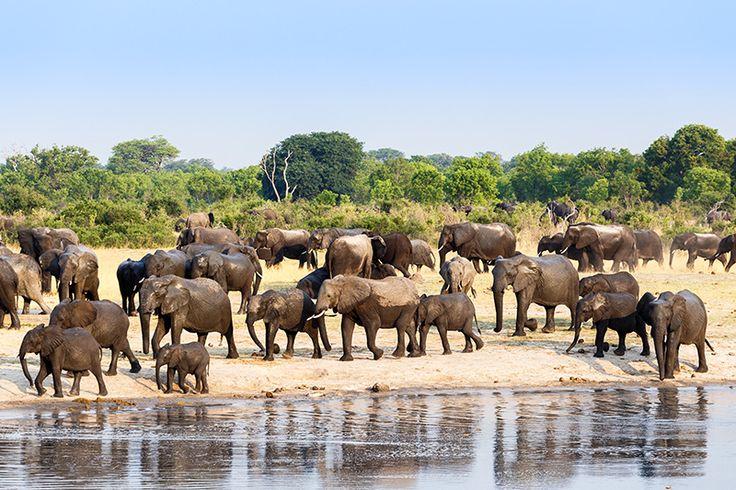 Manadas de elefantes são vistas com facilidade durante todo o dia