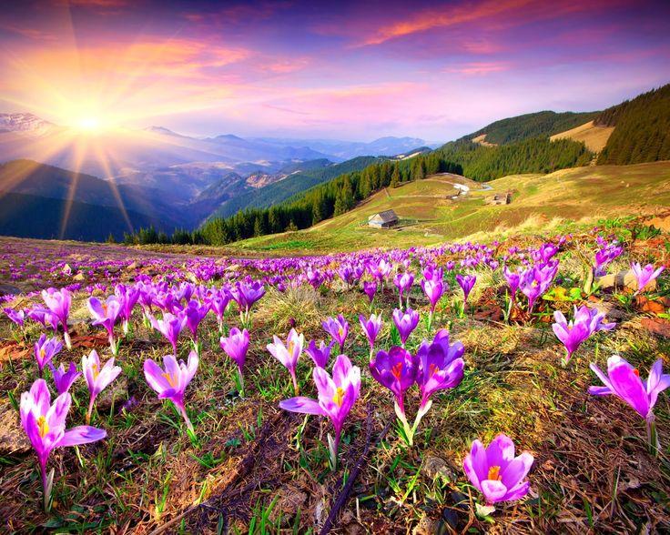 Spring_Flowers-wallpaper-10553062.jpg (1600×1280)