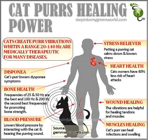 Research reveals cat-human relationship dates back to ...