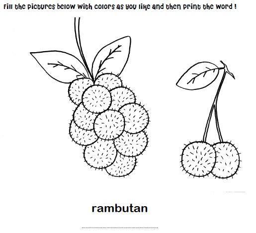 rambutans colouringvietnam