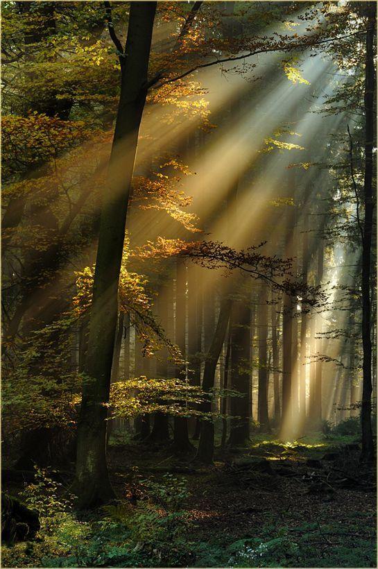 Lichtstrahlen im Eifelwald – Bild & Foto von Ingrid Lamour aus Wald – Fotografie (27166969)