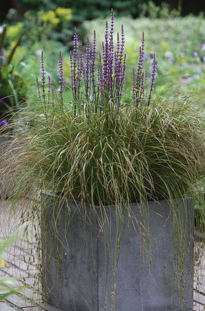 Best summer pots in pictures in pictures toms and summer for Best ornamental grasses for pots
