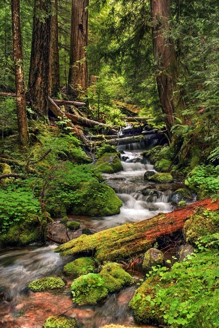 Willamette National Forest-Explored