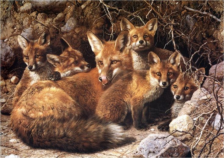 foxes by Carl Brenders