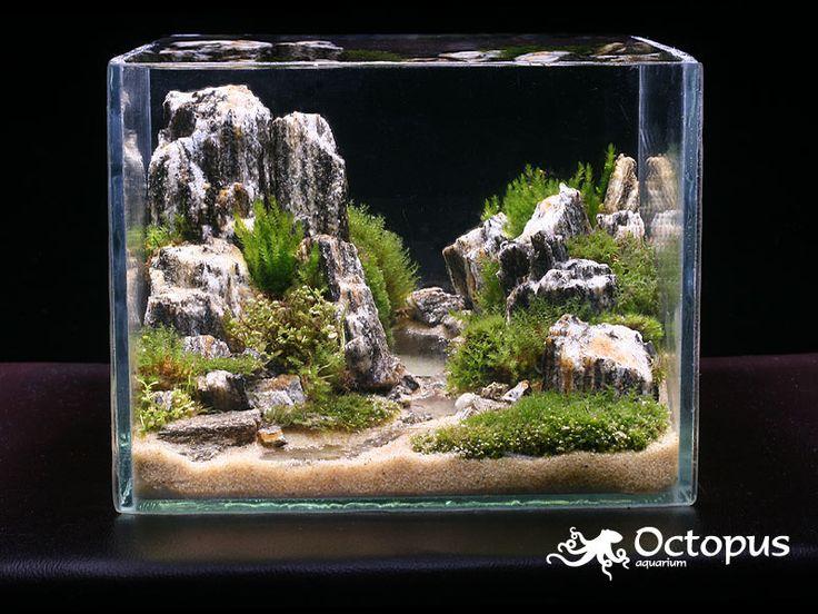 , Plants Tanks, Aquascaping Aquarium, Aquarium Minis, Nano Aquarium ...