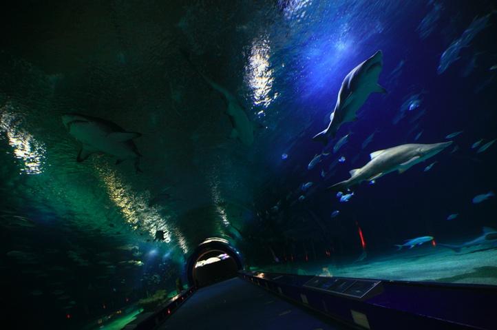 Uno de los lugares más asombrosos del Oceanogràfic