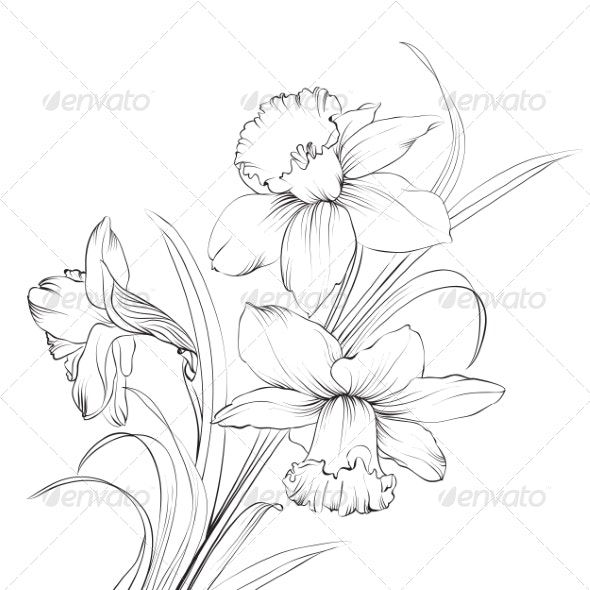 Daffodil Flower By Kotkoa Graphicriver In 2020 Daffodil Tattoo Flower Outline Daffodil Flower Tattoos