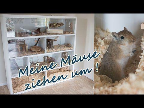 Rennmaus Gehege/ Meine Mäuse ziehen um - YouTube