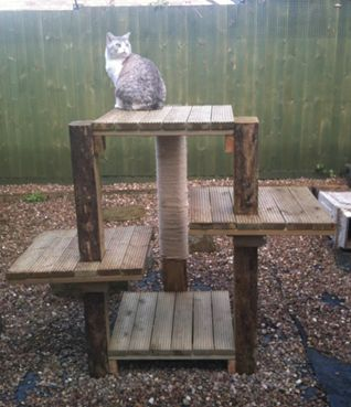 Re: Outdoor Cat Tree