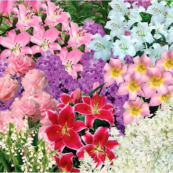 Scented Summer Garden Perennials