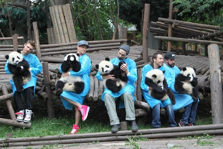 The Backstreet Boys Posing With Giant Panda Cubs