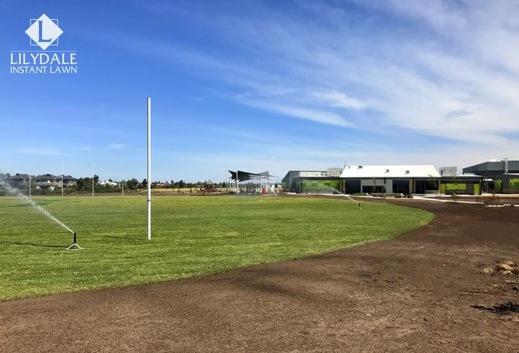 Clyde School Project - Seymore RaceTrack | Lilydale Instant Lawn Care | Love your lawn | Great grass | Lily & Dale | Follow us | Garden Tips & Advice | Contact us | Lawn Solutions Australia Lawn Supplier | Instant Turf |Sir Walter Buffalo DNA Certified | Lawn Solutions Australia | Online Store | Local Pick up & Delivery | Lawn Care | Turf Farm | Melbourne | Victoria | Garden | Grass