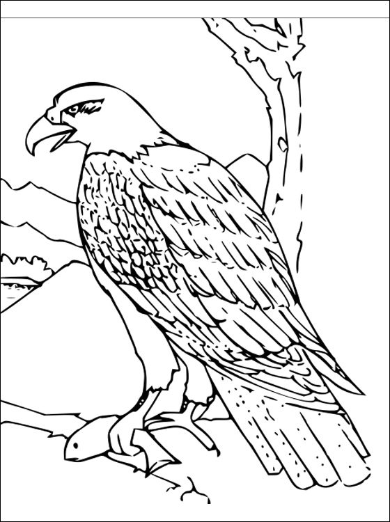 free hawk images Free Hawk coloring and printable page