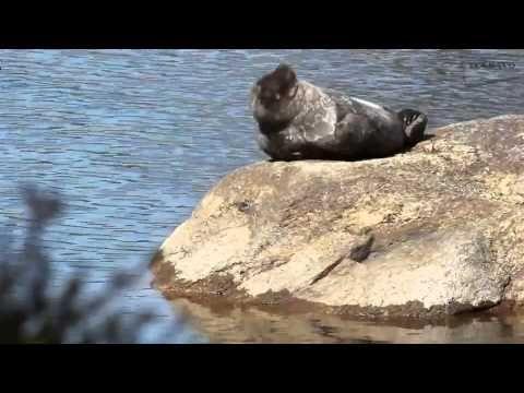 Videossa on Järvi-Suomen luontoa ja elämää parhaimillaan. -------------------------------------------------------------------------------------- EN OMISTA MU...