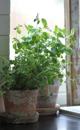 fresh herbs in worn terracottak
