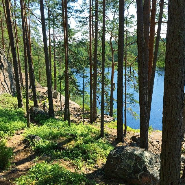 Finnish pine trees on the cliff and a lake view, Repovesi National Park.