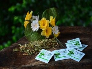 Stevia from Paraguay – Accept it for the sake of my blood sugar level