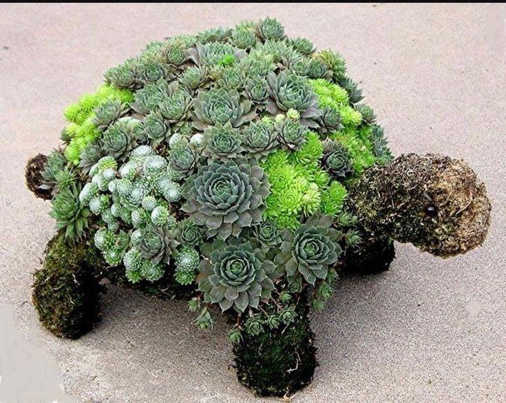 Diy succulent turtle garden topiary plant kit unique