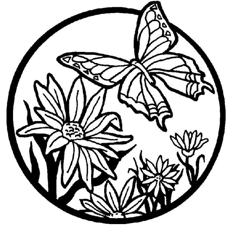 Ideal Butterfly Coloring Pages For Kids 57 Beautiful Butterflies Medium Forage