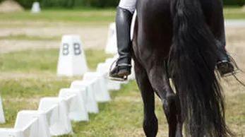Dressage Saddles for sale