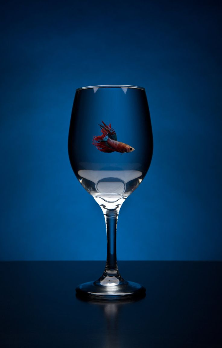 17 best images about betta fish on pinterest betta fish for Wine with fish