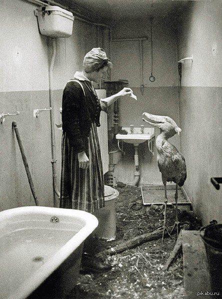 Royal Heron.Berlin 1945-the year