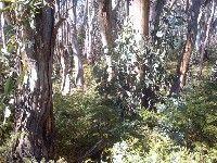 Survival Trading - online tutorial (Australian bush)